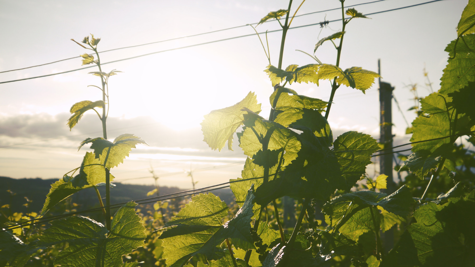 Plants reaching towards a clear and sunny sky, symbolizing growth and mental clarity.